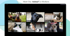 Meet Our Animal Co-Workers with photos of 6 animals: Penny chicken, Goose dog, Nutmeg cat, Fern cat, Lily & Daisy dogs, and Sudio dog